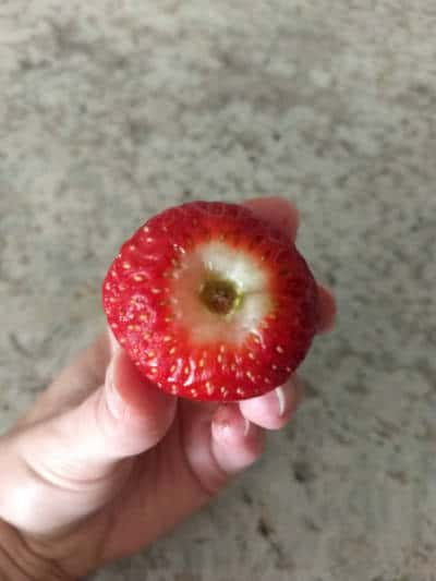 Strawberry without leaves